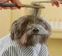 corte-de-cabello-para-perro